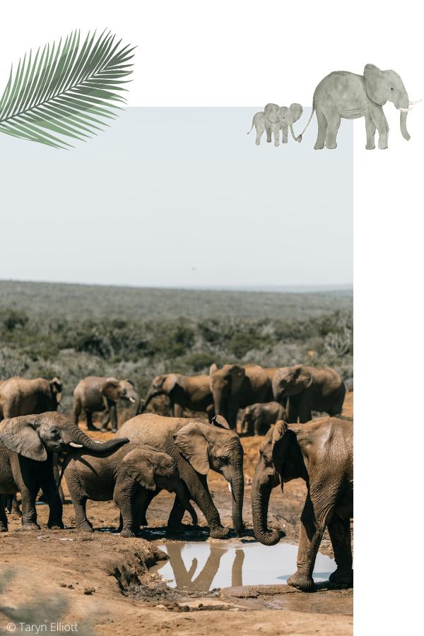 Collection SAVANE - Inspiration éléphant