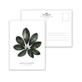 Carte postale Schefflera