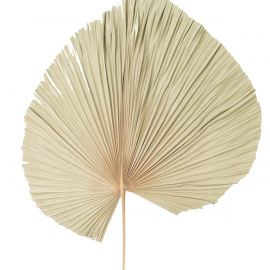 Feuille de palmier décorative