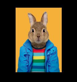 Carte zoo portrait lapin