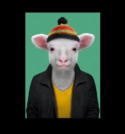 carte zoo portrait mouton