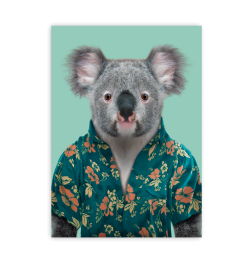 Carte zoo portrait koala
